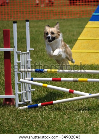 Mixed-breed dog leaping over a double jump at agility trial, copy space, vertical - stock photo