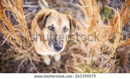 Mixed breed dog looking up - stock photo