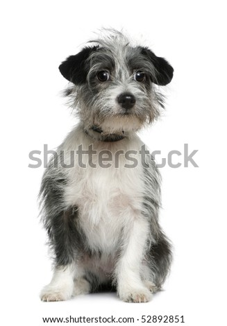 Mixed-breed dog, 6 months old, sitting in front of white background