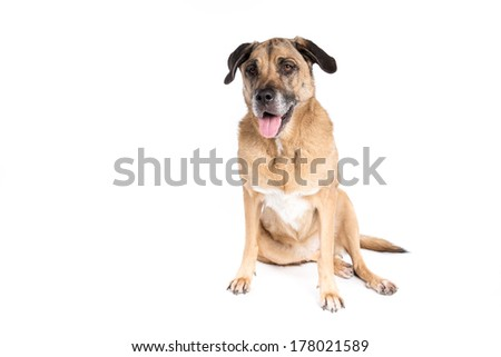 Mixed breed dog on a white background
