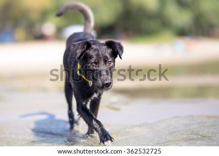Mixed breed dog on summer vacation - stock photo