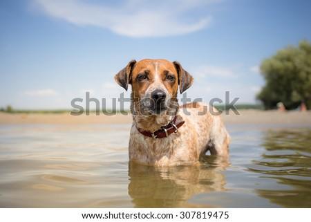 MIxed breed dog on vacation - stock photo
