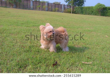 mixed breed dog playing in the green field - stock photo