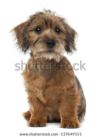 Mixed-breed dog puppy, 3 months old, sitting and looking away against white background - stock photo