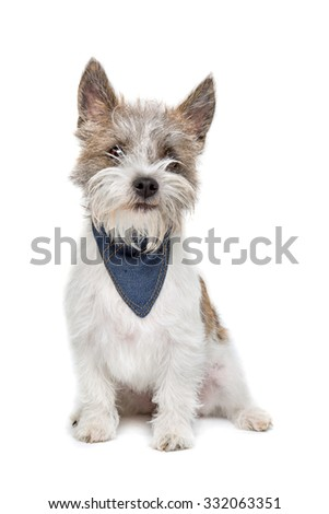 mixed breed dog sitting in front of a white background - stock photo