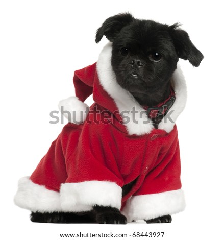 Mixed-breed dog wearing Santa outfit, 11 years old, sitting in front of white background