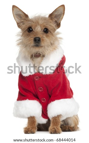 Mixed-breed dog wearing Santa outfit, 10 years old, sitting in front of white background - stock photo