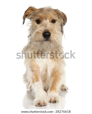 Mixed-Breed Dog with a griffon (18 months old) in front of a white background