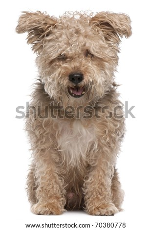 Mixed-breed dog, 6 years old, with mouth open in front of white background - stock photo