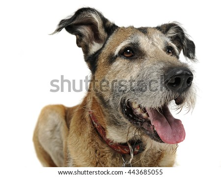 Mixed breed funny dog in a white studio