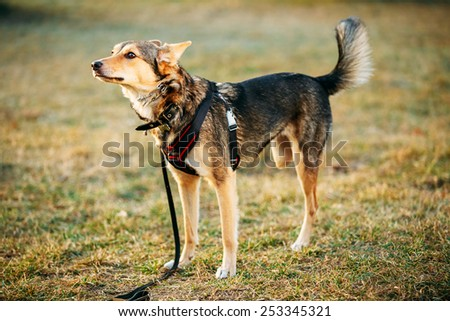 Mixed Breed Medium Size Three Legged Dog Standing At An Angle Looking Off To Side Of Camera. Autumn Time Outdoor Dog Portrait With Only Three Legs - stock photo