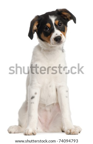 Mixed-breed puppy, 2 and a half months old, sitting in front of white background - stock photo