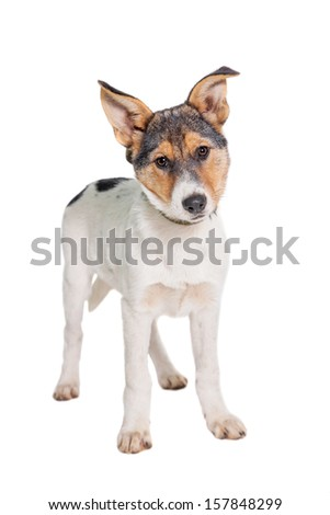 Mixed-breed puppy, 3 months old, isolated on white background - stock photo