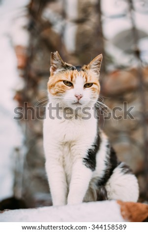Mixed Breed White and Red Cat Play Outdoor - stock photo