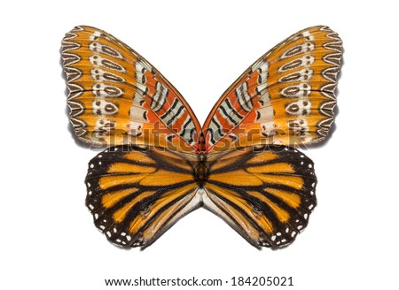 mixed butterfly wings isolated - stock photo