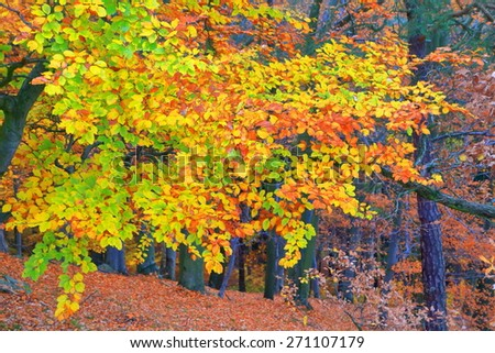 Mixed colors on a tree branch in autumn - stock photo