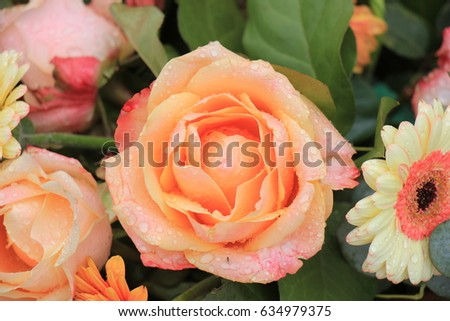 Different Shades Of Orange orange shade rose stock images, royalty-free images & vectors