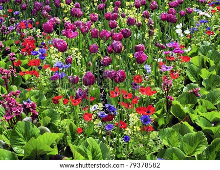 Mixed Flower Garden with a wide aray of colourful plants - stock photo