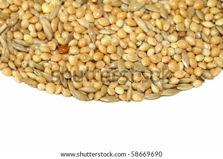 mixed granular food for budgerigars