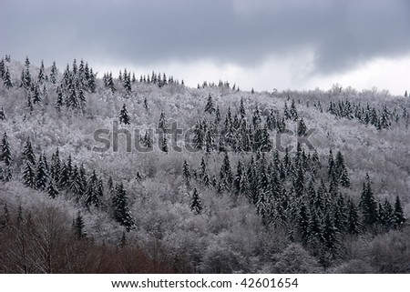 Mixed mountain forest covered with frost - stock photo