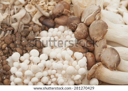 mixed mushroom- Shiitake, King trumpet mushroom (Eringi), Brown beech mushroom (Shimeji), Indian Oyster mushroom, Jew's ear Mushroom, Golden needle mushroom (Enokitake)a lot of mushroom - stock photo