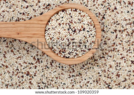 Mixed quinoa seeds with  a wooden spoon. - stock photo