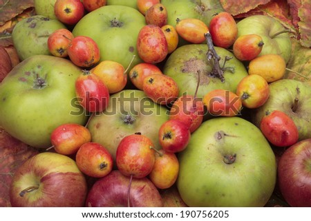 Mixed red and green apples with crab-apples - stock photo
