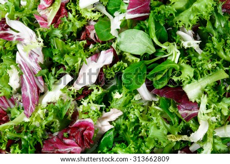Mixed salad leaves  frisee, radicchio and lamb's lettuce. Background, texture. - stock photo