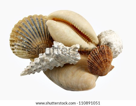 Mixed Sea Shells - Isolated - stock photo