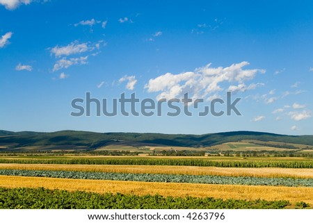 Mixed vegetables field in summer