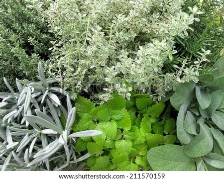 mixture of fresh aromatic herbs - stock photo