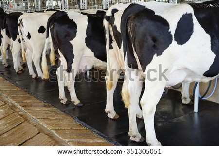 Mlking machines, Dairy cattle farms                   - stock photo