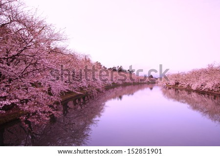 Moat and cherry blossoms of Hirosaki castle, Aomori, Japan - stock photo