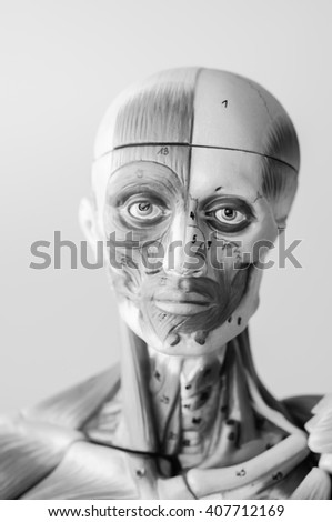 model of human anatomy with black and white color