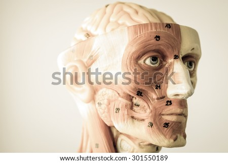 model of human anatomy with old style - stock photo