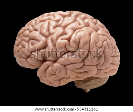 MODEL OF HUMAN BRAIN ON BLACK BACKGROUND