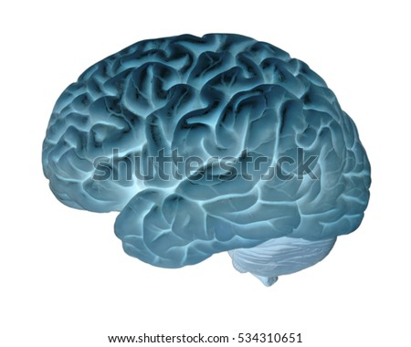 MODEL OF HUMAN BRAIN ON WHITE BACKGROUND