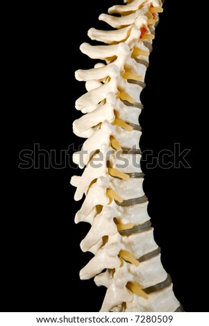 Model of human spine on black. - stock photo
