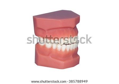 Model of Teeth isolated on white - stock photo