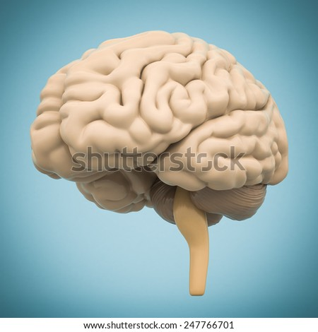 model of the brain isolated on blue background