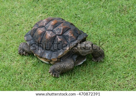 Model of tortoise in garden