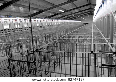 Modern breeding pig farm, a hall for insemination (fertilization), artificial