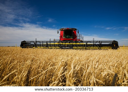 modern combine harvester working a wheat field - stock photo