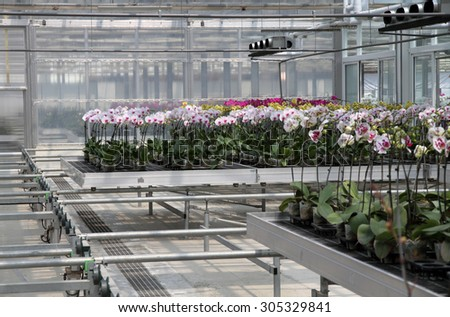 Modern flower nursery  - stock photo