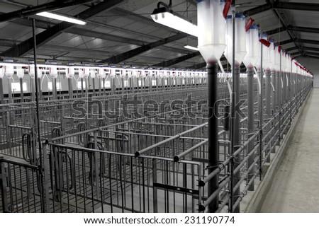 Breeding Room Pigs