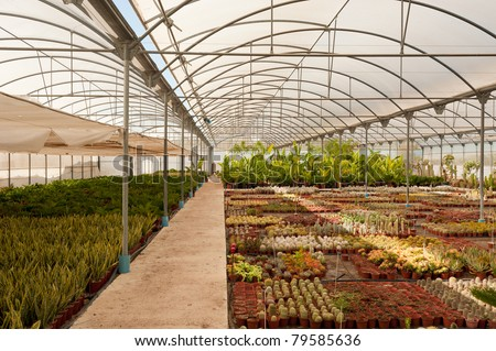 Modern industrial greenhouse full of exotic cactus species - stock photo
