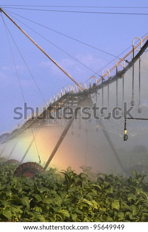 Modern Irrigation system in a tobacco field - stock photo