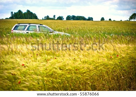Modern silver car between yellow and green plants - stock photo