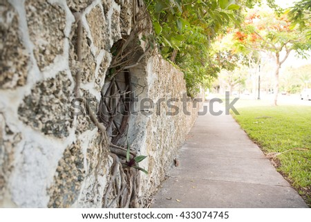 Modern style design decorative cracked real stone wall surface with cement and tree roots growing through the window. View on sidewalk. Miami, USA, Florida, Key Biscayne. USA  - stock photo