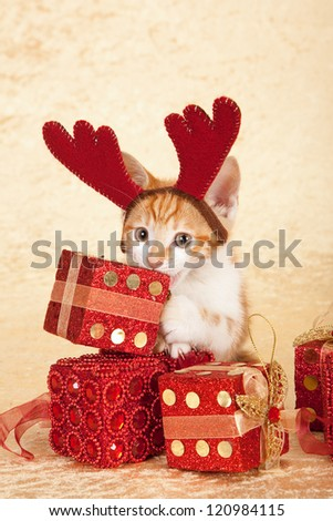 Moggie kitten with christmas gifts and head antlers horns on beige background - stock photo